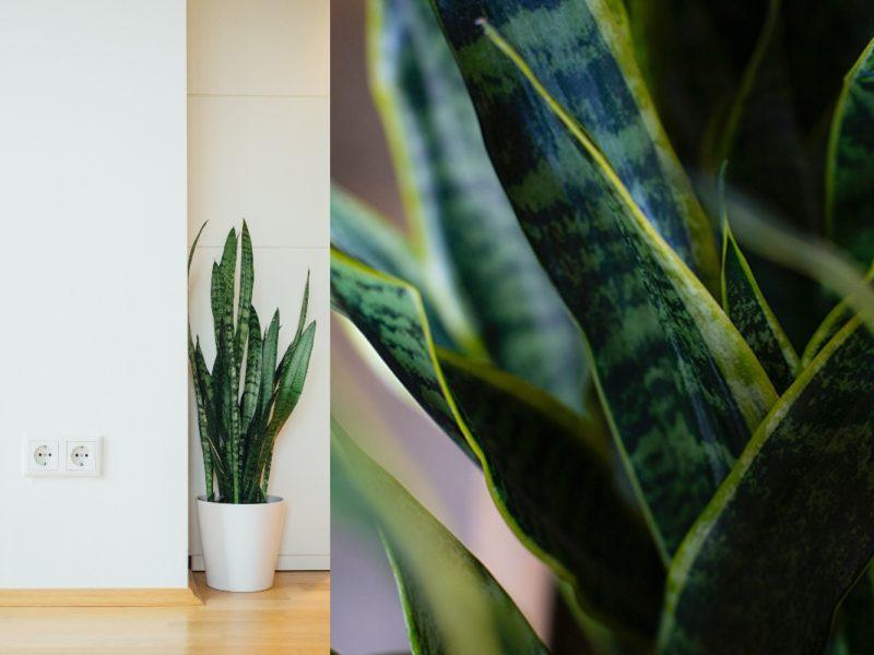 Pelbagai Manfaat! Kini Tumbuhan Indoor Menjadi Kegilaan Orang Ramai