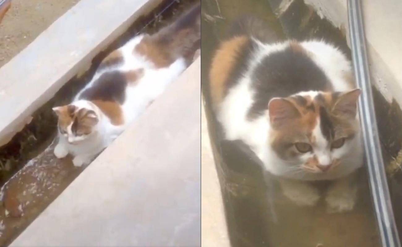 Kucing Berendam Dalam Longkang