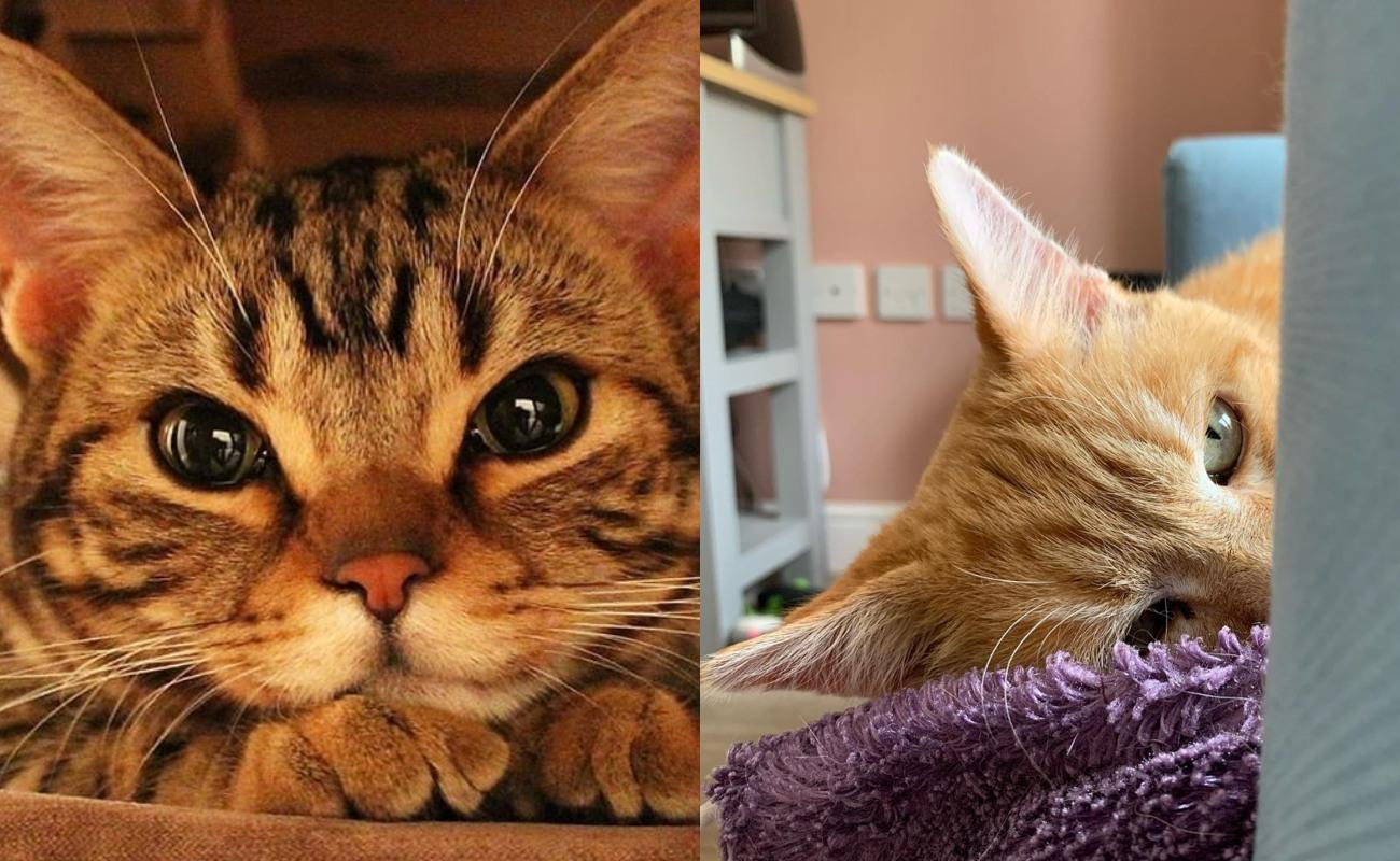 Tanda-tanda 'Meow' Kesayangan Anda Sedang Stress